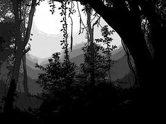 """""""...sin dejar huellas en la tierra muerta"""". (ix 2017) Tags: byn bw cuernavaca ahuacatitlán morelos méxico mexico bosque forest árboles trees vegetación flora montaña mountain gradiente gradient israfel67 contrast contraste"""