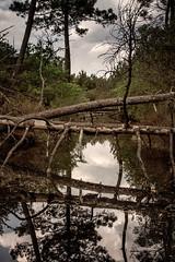 Près salés, Arès, France (pas le matin) Tags: préssalés arès france europe bassindarcachon eau water trees aquitaine