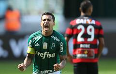 Palmeiras x Vitória (16/07/2017) (sepalmeiras) Tags: allianzparque campeonatobrasileiro palmeiras sep sériea vitória palmeirasxvitoria16072017 dudu