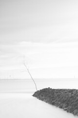 Zen on a pole (explored 19.07.2017, #48) (Fujibert) Tags: baum gemütsstimmung highkey landscape landschaft langzeitbelichtung location longexposure meer ort schwarzweis stil style wald wremen zen blackwhite bw sw
