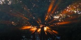 A Blast of Rays  18-07-2017 001