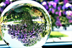 cottage garden window (Lana Pahl / Country Star Photography) Tags: orbaliciousness refraction balls crystalballphotography crystalballs throughthecrystalball