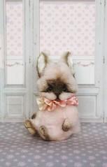 For adoption 150$ 🐰 (lena.beloborodova) Tags: love present rabbit teddy bunny sale adoption