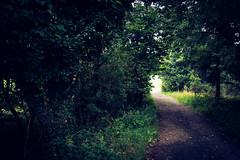 Path in the Forest (Bom-he) Tags: path weg pfad wood forest wald landscape landschaft saarland deutschland germany
