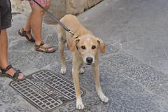 902 Siracusa (Pixelkids) Tags: siracusa italien sizilien sicily anton hund dog
