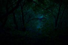 к свету (seagul__l) Tags: flickr природа мрак тени безмятежность меланхолия сумерки деревья таинственность наоткрытомвоздухе