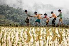 Children game (Asian Hideaways Photography) Tags: children kids game rice ricefield reflection mountain water vietnam vietnamese