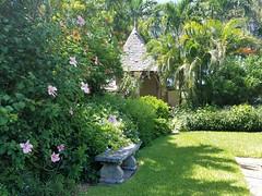 Happy Bench Monday (Helenɑ) Tags: churchofbethesdabythesea courtyard bench garden flower hybiscus palmtrees gazebo flowers