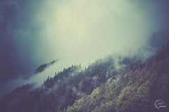 Fog on mountains (Julien CHARLES photography) Tags: alpes alps france brouillard dramatic fog foret montage mountain mountains