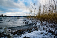 Winter (jpteitti) Tags: ocean winter nature helsinki landscape reed outdoor sea coast kallahti ice helsingfors uusimaa finland fi