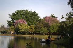 Jataí, Goiás, Brasil (Proflázaro) Tags: brasil goiás jataí parqueecológicodiacuy parque bosque cerrado árvore natureza ecologia flor