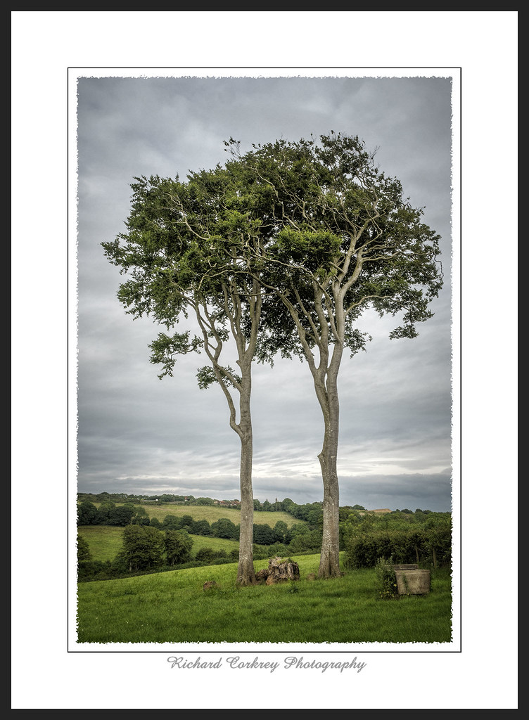 tags tree landscape - photo #15