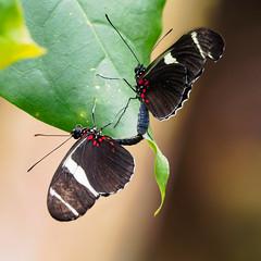 Love is in the air (Karsten Gieselmann) Tags: 40150mmf28 bayern bokeh braun deutschland em5markii grün insekten mzuiko microfourthirds nürnberg olympus schmetterling tiergarten brown green kgiesel m43 mft