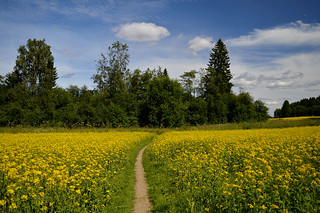 Walk this way... Smell of flowers is absolutely fantastic 💚🌾🌿 Summer in Finland