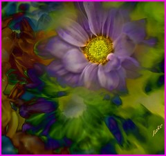 Chrysanthemum abstract (JAKE473) Tags: artificial coloured chrysanthemums abstract