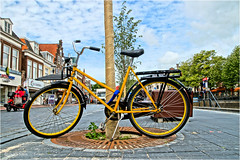 Yellow Monster (Hindrik S) Tags: bike bicycle fyts rad fiets tree beam boom baum street straat strjitte nijstêd nieuwestad liwwadden ljouwert leeuwarden lonely abandoned sonyphotographing sony sonyalpha a57 α57 slta57 tamron tamronspaf1750mmf28xrdiiildasphericalif f28 yellow geel giel