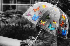 butterflies (s@ssyl@ssy) Tags: langley bc rainy drizzly wet downbytheriver eleven our1stdayexploring selectivecolour