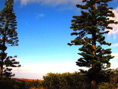 Island trees (thomasgorman1) Tags: trees island hawaii pines pinetrees lanai canon bluesky dark colors