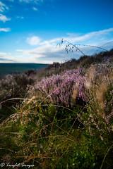 Lush morning (marklinton94) Tags: peaks nikond600 sunpak sunrise dew mist landscape lush hillside heather district green sky