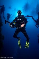 IMG_5982 (davide.clementelli) Tags: scuba underwater underwaterlife diving dive immersione portofino colori colors colore color fishes fish pesci