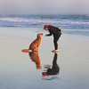 Beach dog (YetAnotherLisa) Tags: red dog dogslife beach sea ocean pacific fortfunston sanfrancisco mutt golden goldenretriever lab attention sit reflection