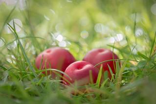 windfall cherries for macro mondays 'three'