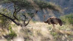 Tsavo West-8447 (ovg2012) Tags: kenia kenya tsavo tsavowestnationalpark