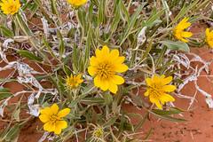 Canyonlands 5 (svubetcha) Tags: landscape flowers arizona sunset bridge hourse mission gas utah