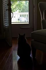 Wishing (ramseybuckeye) Tags: fester cat door looking out wishing shadows pentax art