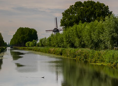 8A0A4074 (ct_purley) Tags: belgium bruges damme real canal windmill trees