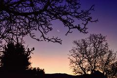 Silhouette & Crescent moon (Kevin_Jeffries) Tags: moon crescent waning silhouette night lowlight kevinjeffries iso6400 nikon nikkor d7100 dof sky tree hill walnuttree depthoffield