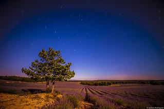 Lavender Fields, Brihuega, SPAIN