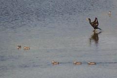 Anglų lietuvių žodynas. Žodis pond-life reiškia tvenkinys-gyvybės lietuviškai.