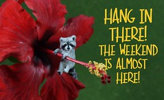 Hang in there! (Teensyweensybaby) Tags: tgif friday miniature dollhouseminiature animal hand made polymerclayanimal oneinchscale flocked nature pet