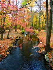 Ringwood Park Autumn Stream (Stanley Zimny (Thank You for 24 Million views)) Tags: ringwood park fall autumn strean color seasons reflection
