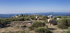 Lozère-001 (hervv30140) Tags: paysage panoramique bœuf pâturage altitude sommet ligne horizon bleu crête ciel clair tranquille calme repos