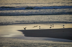 Reflejos tardíos (SantiMB.Photos) Tags: 2blog 2tumblr 2ig atardecer dusk playa beach océano ocean atlántico atlantic vagueira vagos aveiro gaviotas seagulls praiadavagueira portugal prt