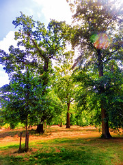 Kensington Gardens, Central London (photphobia) Tags: kensingtongardens london city uk oldwivestale park royalpark green royalparksoflondon tree trees river lake lakes