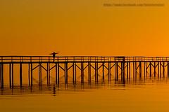 Take off (wagnerm25) Tags: trapiche pelotas pier laranjal brazil sunset sunrise twilight dock deck