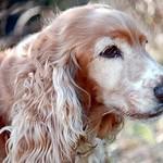 2002 - Kelly il cane
