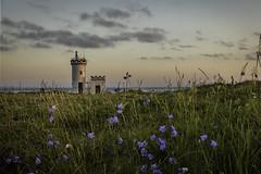 Bluebells and Lighthouses (Fifescoob) Tags: elie fife coast seascape landscape sea scotland evening summer bluebell flower flora lighthouse
