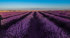 Colores y olores (Jesus_l) Tags: europa españa valladolid tiedra campodelavanda camposdecastilla jesúsl
