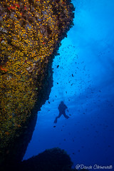 IMG_6000 (davide.clementelli) Tags: scuba underwater underwaterlife diving dive immersione portofino colori colors colore color fishes fish pesci