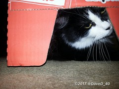 """Nina says """"Good Morning Twitterworld! I'm hiding from Dave! I don't think he can see me!👀 Have a funtastic… https://t.co/R8z0kfcr0K (thed4rkestrose) Tags: daved40 likes d4rk r0se d4rk3str0se d4rk3st d4rkr0se beauty beaut"""