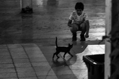 """You've got a friend in me"" /  Kindness of strangers (Özgür Gürgey) Tags: 2017 bw d750 darkcity nikon sirkeci blur candid cat evening friends lines lowlight shadows street istanbul"