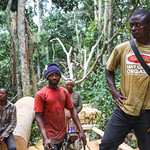 Timber industry in Cameroon thumbnail