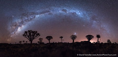 The Southern Arc (David Swindler (ActionPhotoTours.com)) Tags: africa trees milkyway panoramic southern stars night silhouette arc nightscape tree pano southernhemisphere