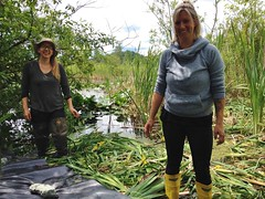 Volunteers laying liner (BC Wildlife Federation's WEP) Tags: outreach public yellowflagiris bcwf education wep wetlandseducationprogram invasive species control research wetland bcwildlifefederation cheamlake cheam rosedale chilliwack