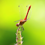 dragonfly #19 thumbnail