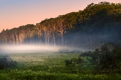 Sunrise (DaveLawler) Tags: fog sunrise sun trees massachusetts newengland swamp field nikon nikkor d500